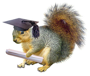 Squirrel with graduation cap and diploma.